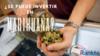 Cannabis thumb