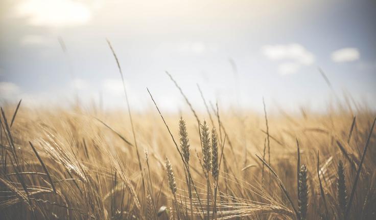 Los seguros para el sector agropecuario con subsidio estatal benefician a los Agricultores