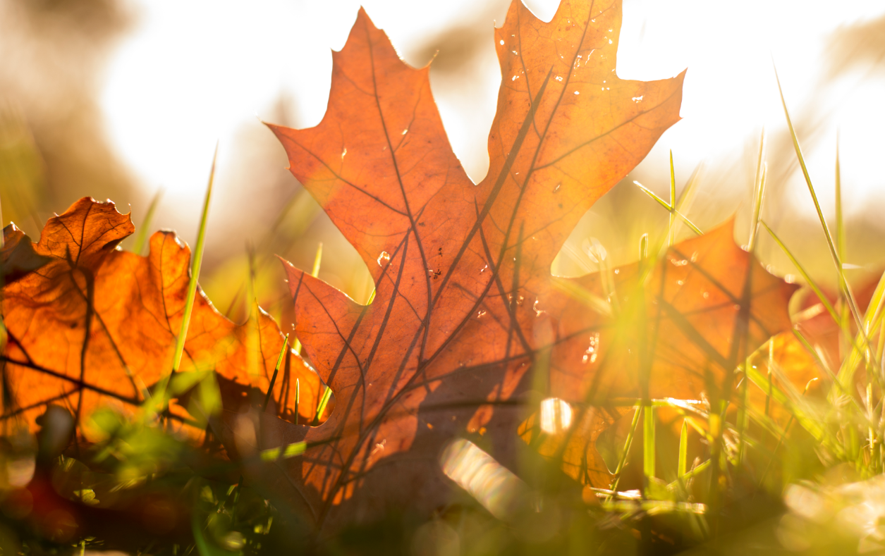 seguros nogal otoño
