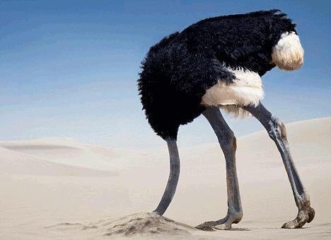 Estrategia del avestruz: esconder la cabeza bajo tierra