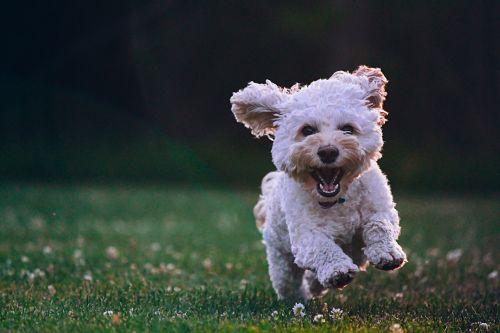 inversión en mascotas