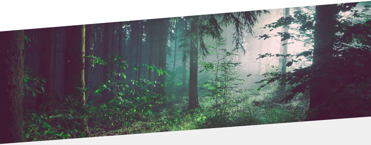 Imagen bosque