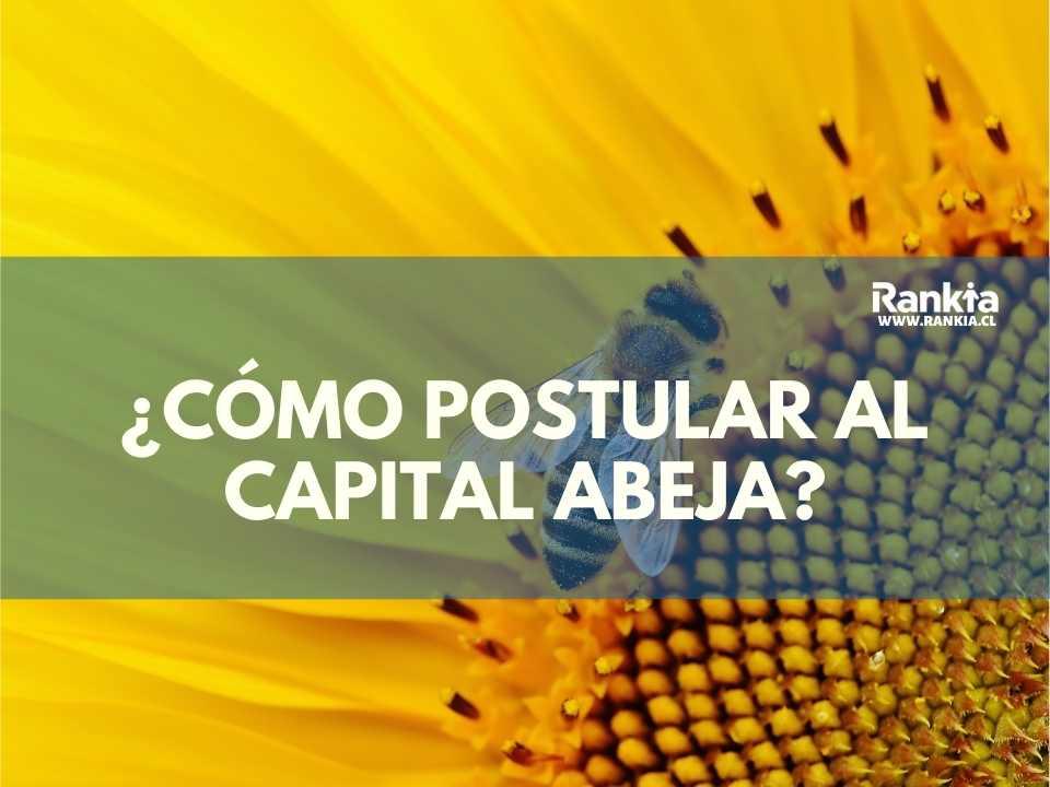 ¿Cómo postular al capital abeja? Requisitos y postulaciones